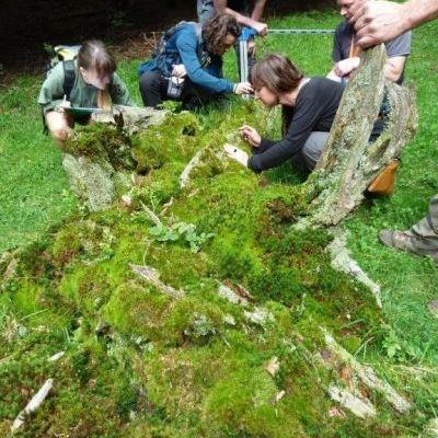 Formation de bénévoles sur les vieilles forêts © Rémy Josette