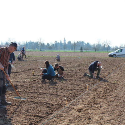 Semis de céréales de printemps au conservatoire de Duppigheim le 23 mars 2019